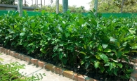Community-Tree-Nursery-for-Collective-and-Enrichment-Plantation